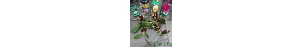 Млади Растения